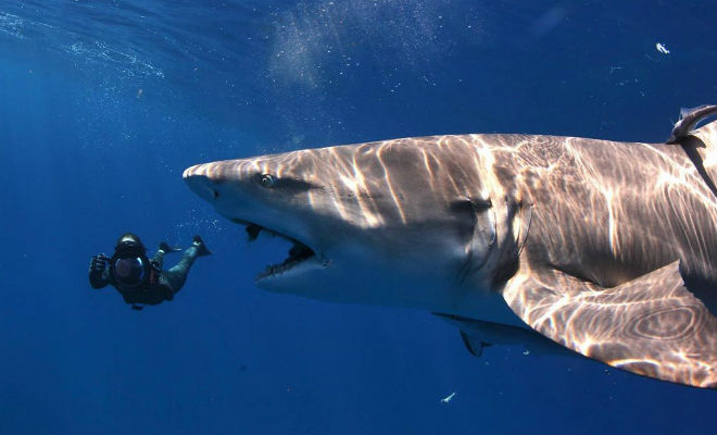 Охота на акул | 400x660