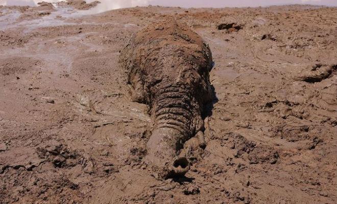 Пастух шел мимо болота и увидел, что кочка шевелится. Слона почти затянуло в топь, но мужчина пришел на помощь