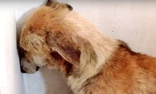 Собаку забрали у плохого хозяина, и она все время смотрела в стену, пока ей не помогла другая собака