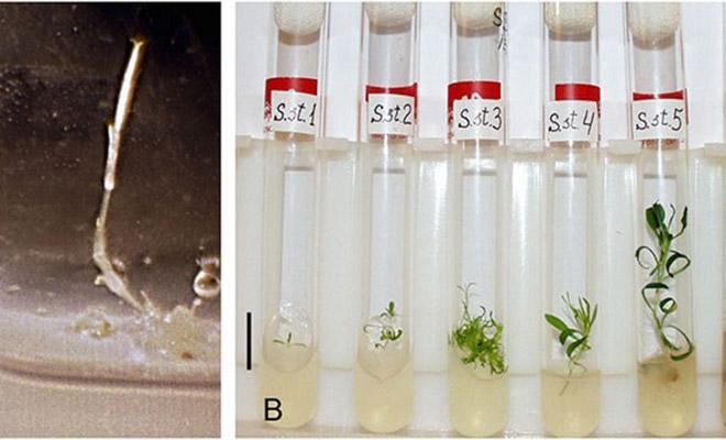 Российские ученые нашли в вечной мерзлоте семена и вырастили растения возрастом 32 000 лет