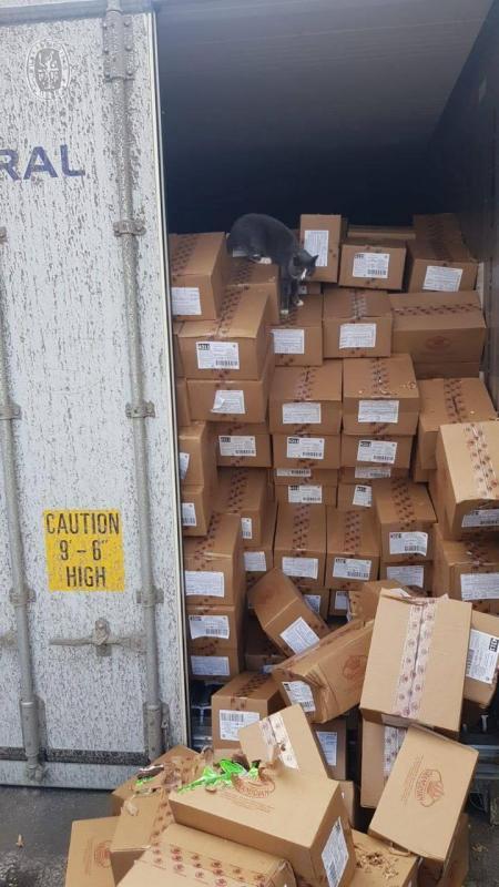 Одесская кошка пробралась в грузовой контейнер и приехала в Израиль: три недели питалась конфетами