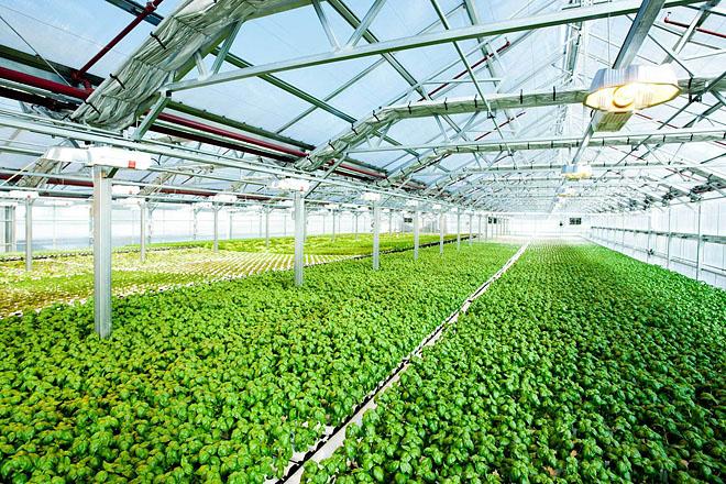 Инновационные теплицы для выращивания овощей 95
